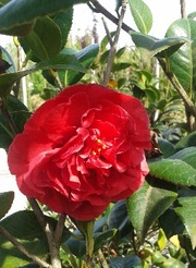 Декоративные растения итальянского качества . Прямые поставки. - foto 7