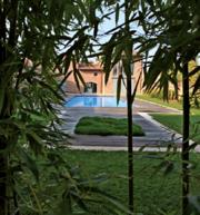 Декоративные растения итальянского качества . Прямые поставки. - foto 21